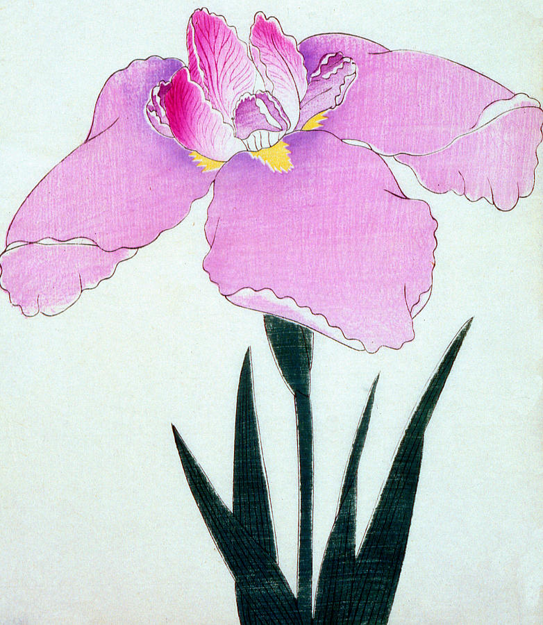 Floral Painting - Japanese Flower by Japanese School
