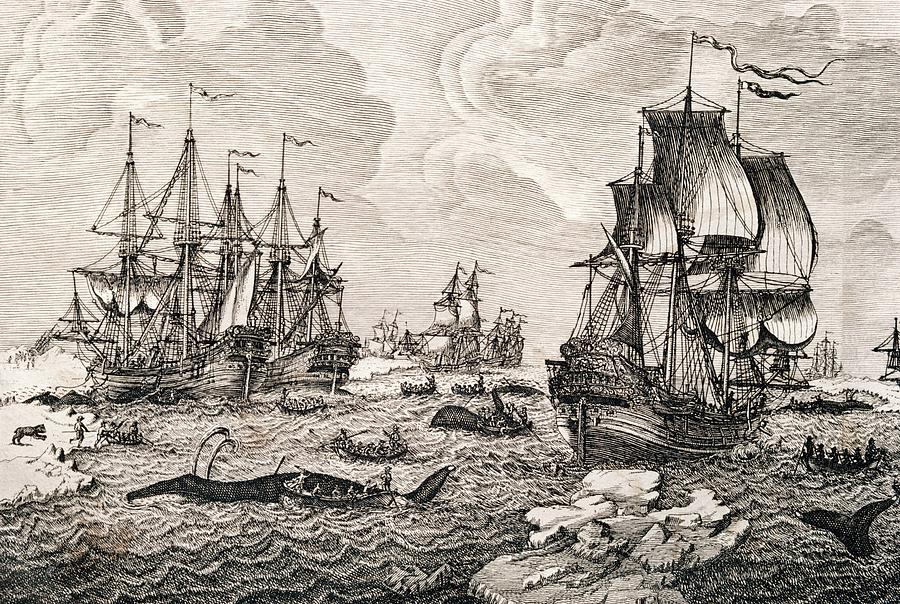 Animal Photograph - 18th Century Dutch Whaling Fleet by George Bernard/science Photo Library