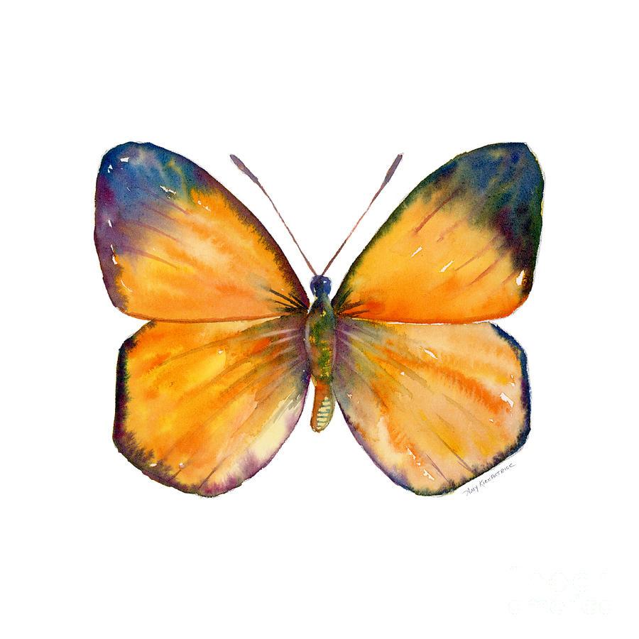 Delias Painting - 19 Delias Aruna Butterfly by Amy Kirkpatrick