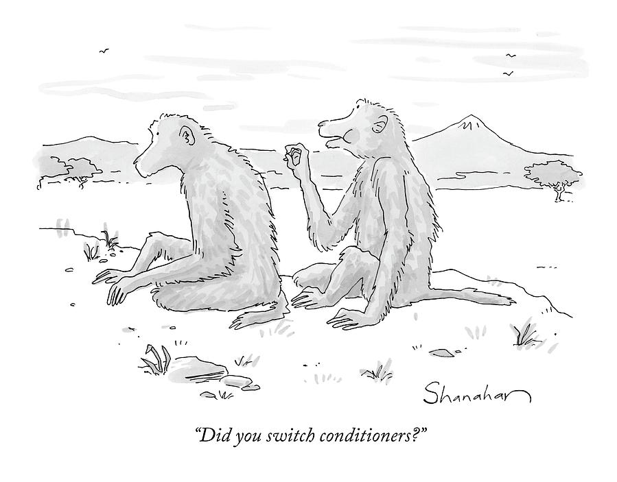 Monkeys Drawing - Did You Switch Conditioners? by Danny Shanahan