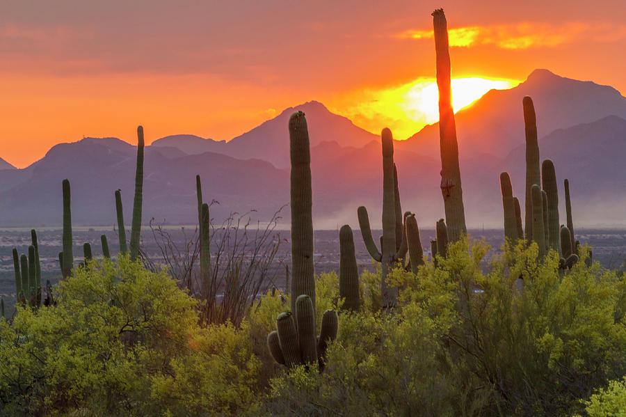 Arizona Photograph - USA, Arizona, Saguaro National Park by Jaynes Gallery