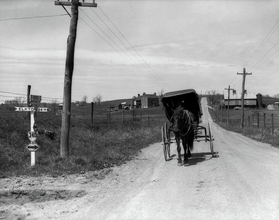 Horizontal Photograph - 1920s 1930s Amish Man Driving Buggy by Vintage Images