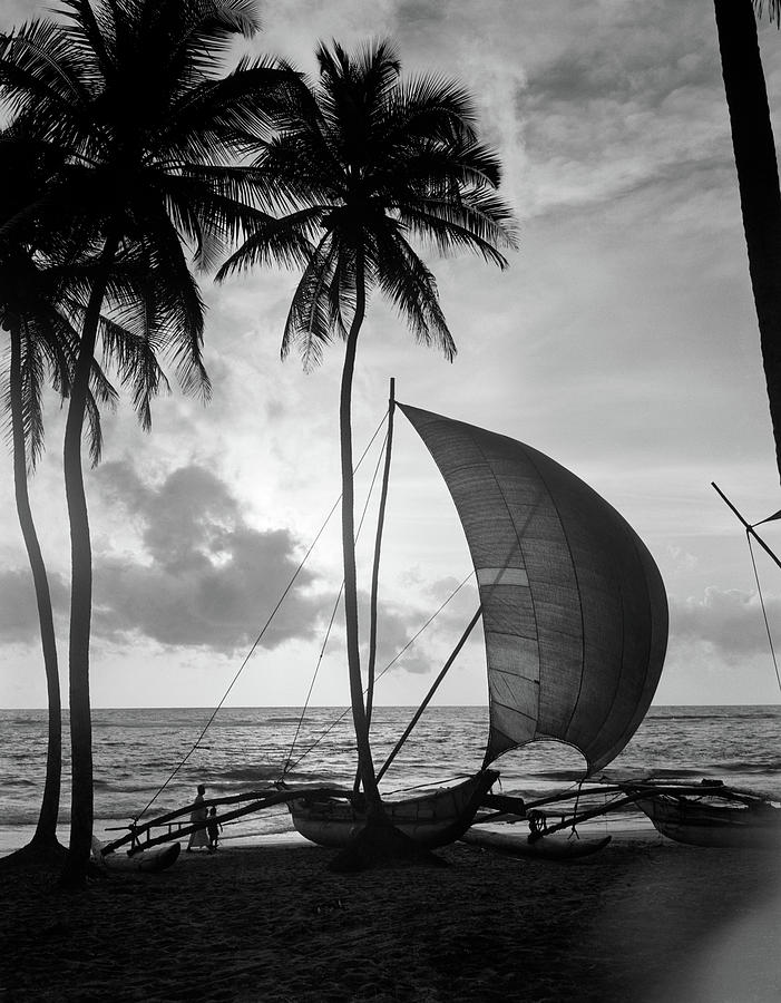 Vertical Photograph - 1930s Single Catamaran On Tropical by Vintage Images