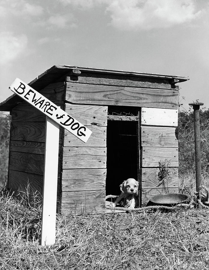 Vertical Photograph - 1950s Cocker Spaniel Puppy In Doghouse by Vintage Images