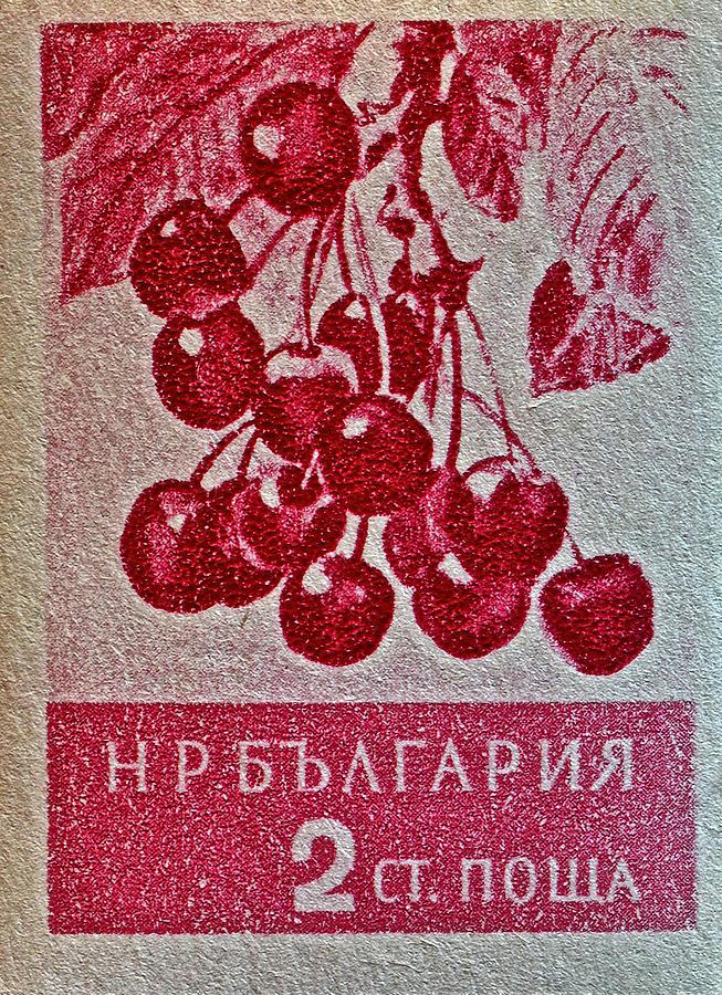 Wild Cherry Photograph - 1956 Bulgarian Wild Cherry Stamp by Bill Owen