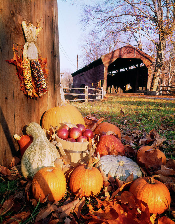 Vertical Photograph - 1960s Harvest Display Of Pumpkins by Vintage Images