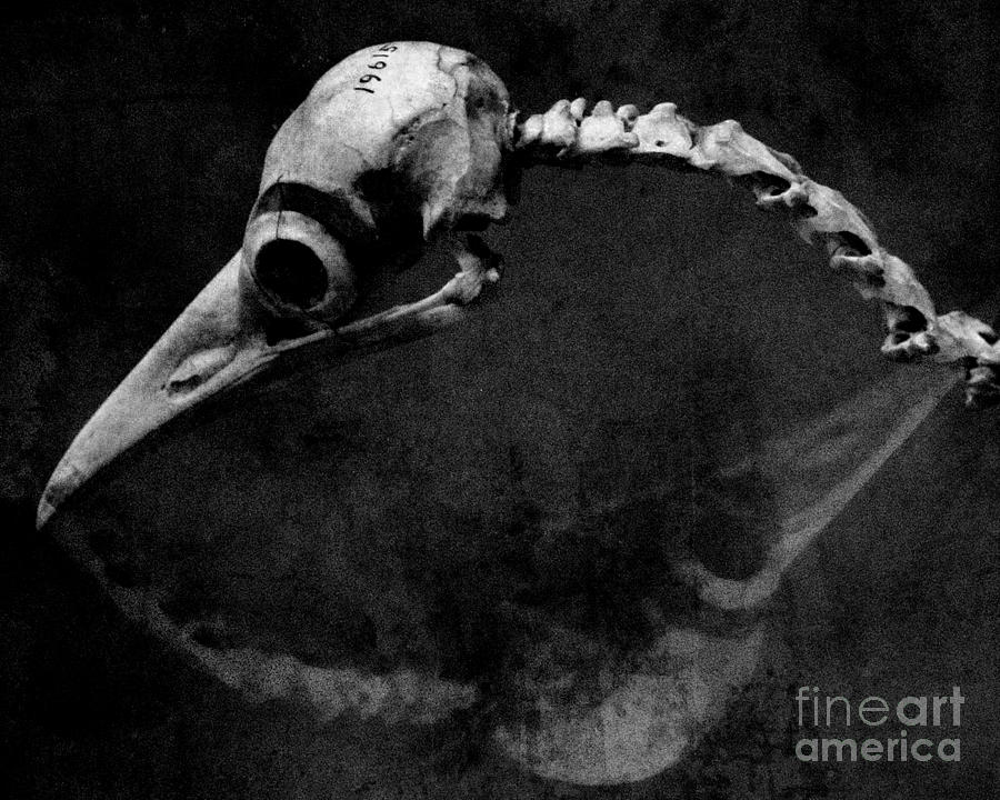 Bird Skeleton Photograph - #19615 by Sharon Coty