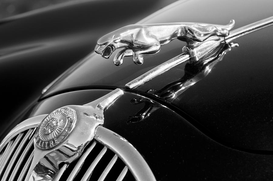 Black And White Photograph - 1964 Jaguar Mk2 Saloon Hood Ornament And Emblem by Jill Reger