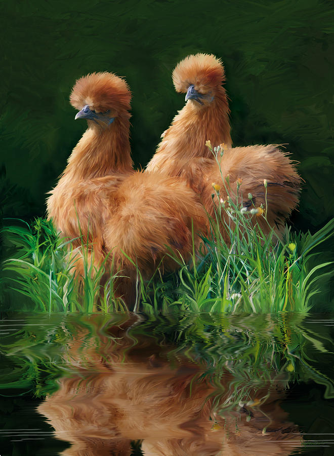 Chicken Digital Art - 54. 2 Buffs This One Can Be Printed by Sigrid Van Dort