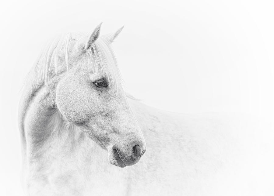 Equine Photograph - A Gentle Soul by Ron  McGinnis