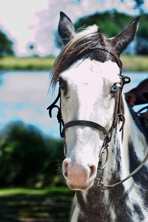 Horse Photograph - A Horse Is A Horse Of Course by Frank Feliciano