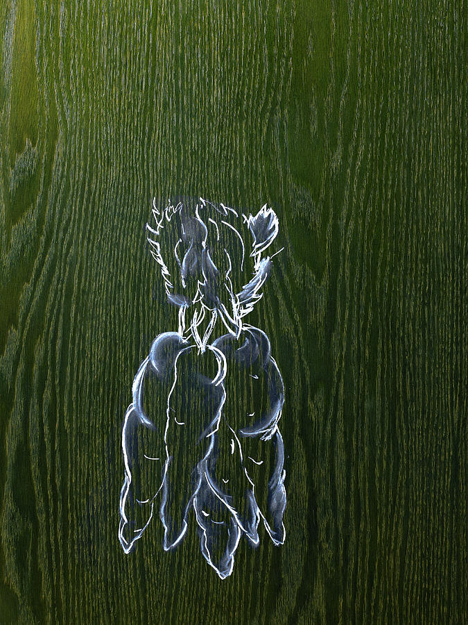 A Line Drawing Image On A Natural Wood Photograph by Mint Images - David Arky