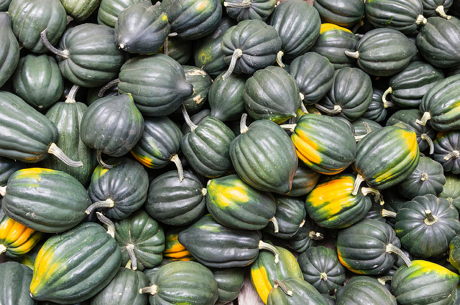 Agriculture Photograph - Acorn Squash  by John Trax