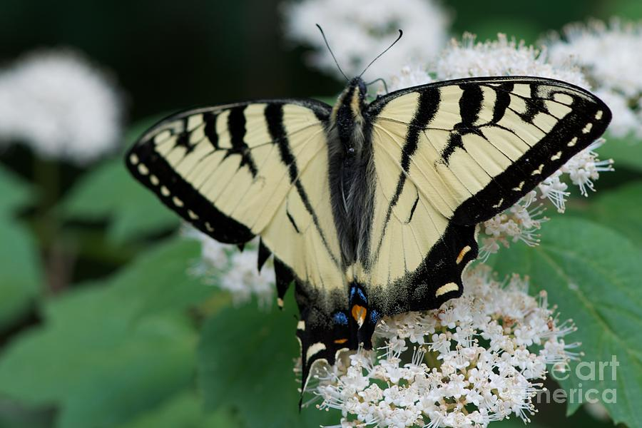 Butterflies Photograph - Afternoon by Joseph Yarbrough