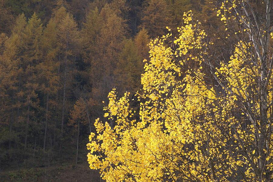 Mountain Photograph - Alberi by Niki Mastromonaco