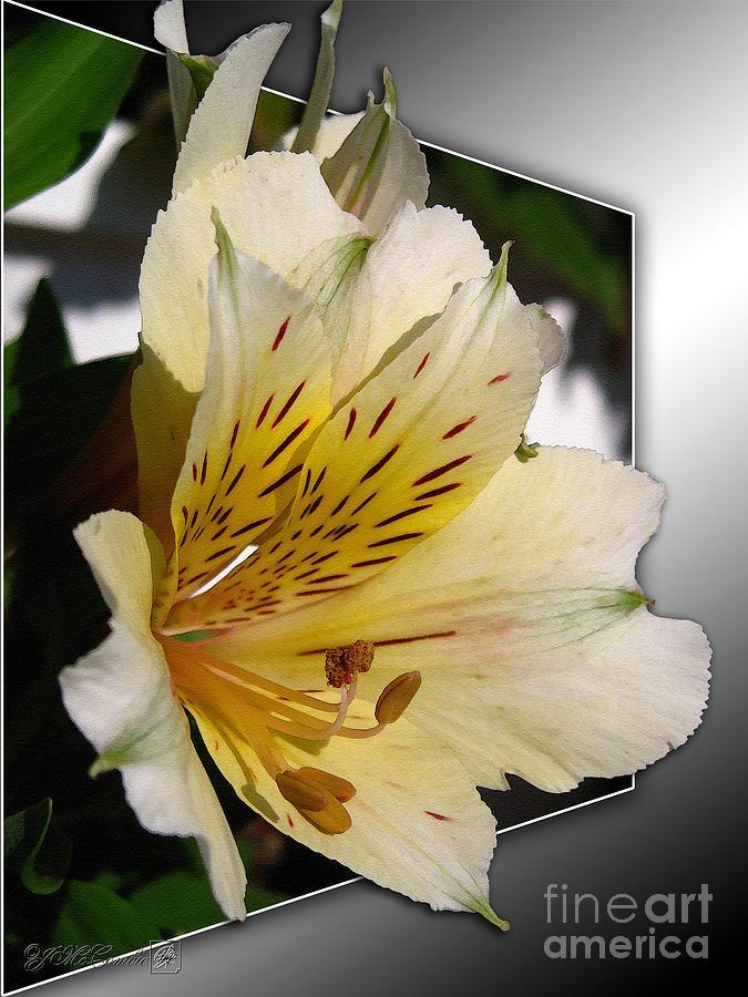 Alstroemeria Painting - Alstroemeria Named Marilene Staprilene by J McCombie