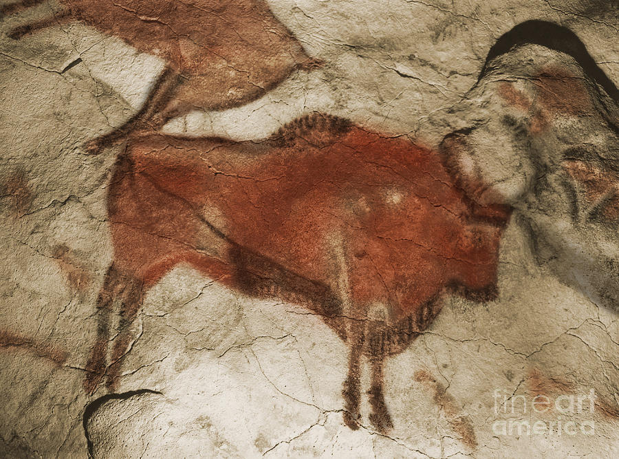 Cave Painting Photograph - Altamira Cave Paintings by Photo Researchers