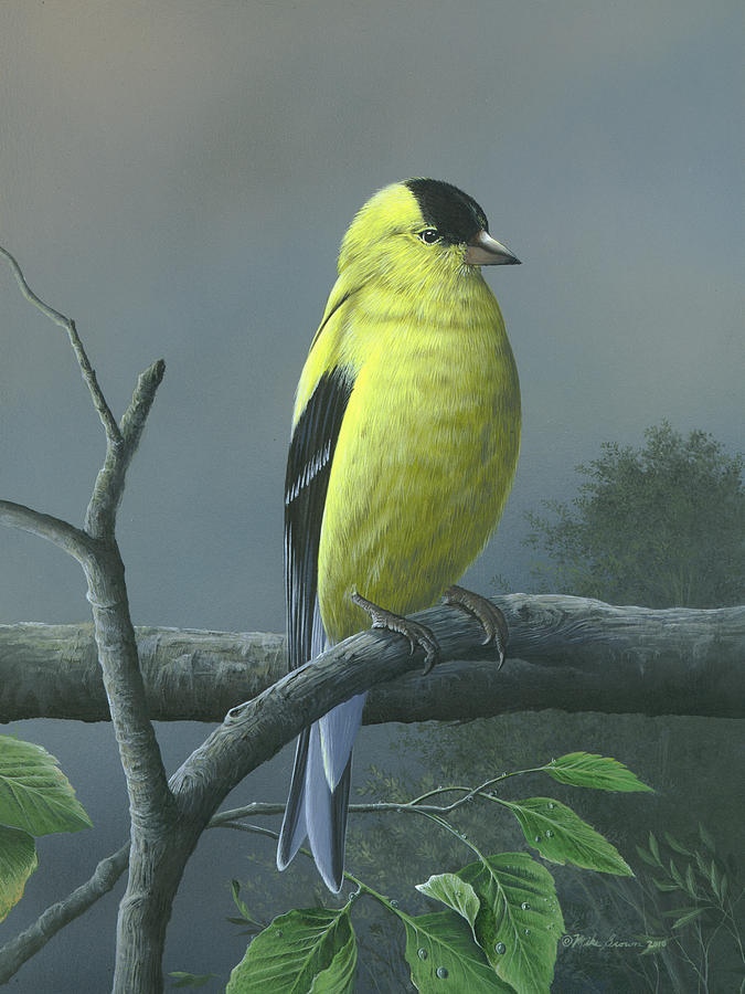 American Goldfinch Painting by Mike Brown