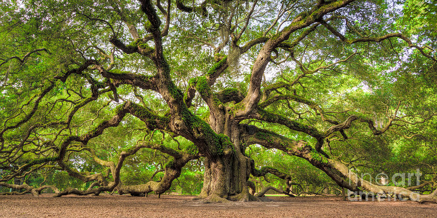 Angel Oak Tree Photograph - Angel Oak Tree of Life by Dustin K Ryan