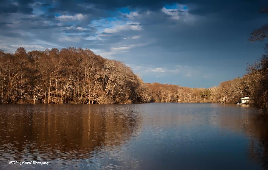 Tree Photograph - Apalachicola River  by Debra Forand