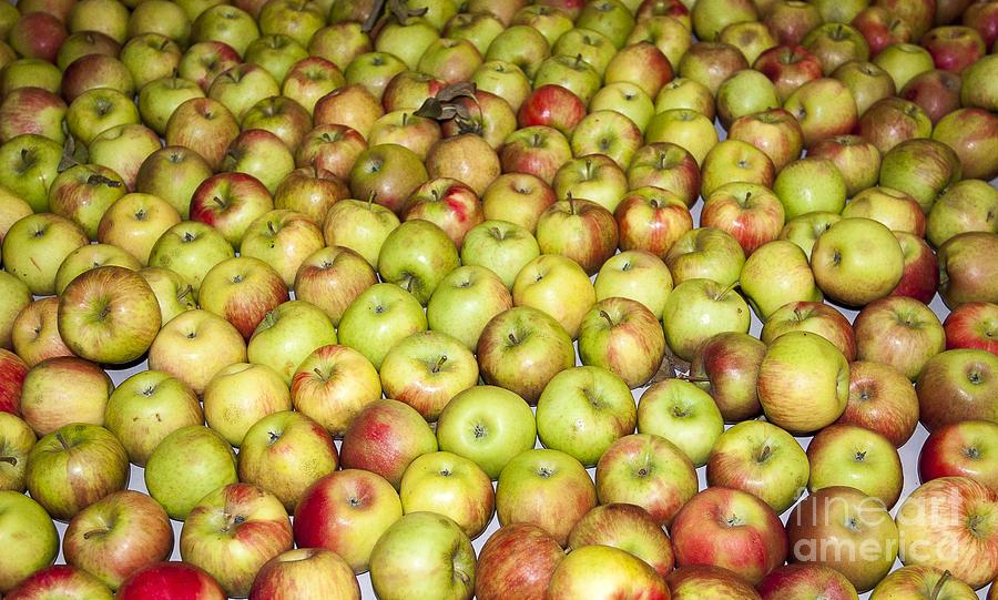 Apples Photograph - Apples by Steven Ralser
