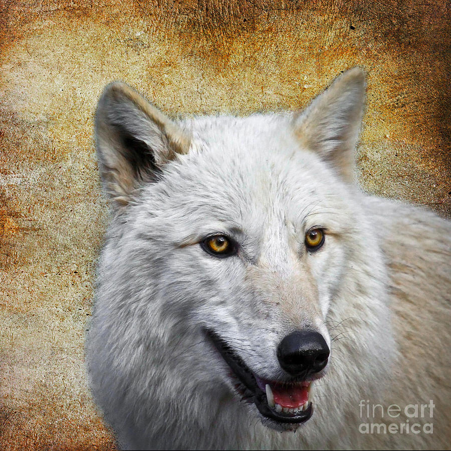 Wolf Photograph - Arctic White Wolf  by Steve McKinzie