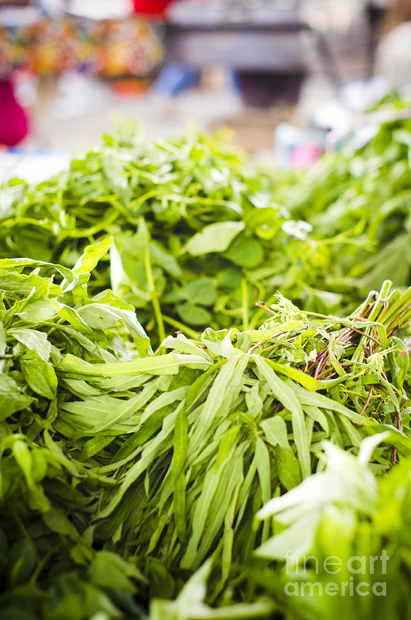 Vegetable Photograph - Asian Market Vegetable by Tuimages