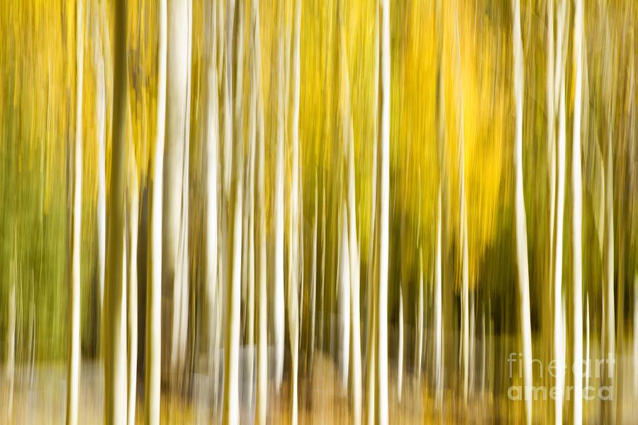 Aspen Photograph - Aspen Glow by Bryan Keil