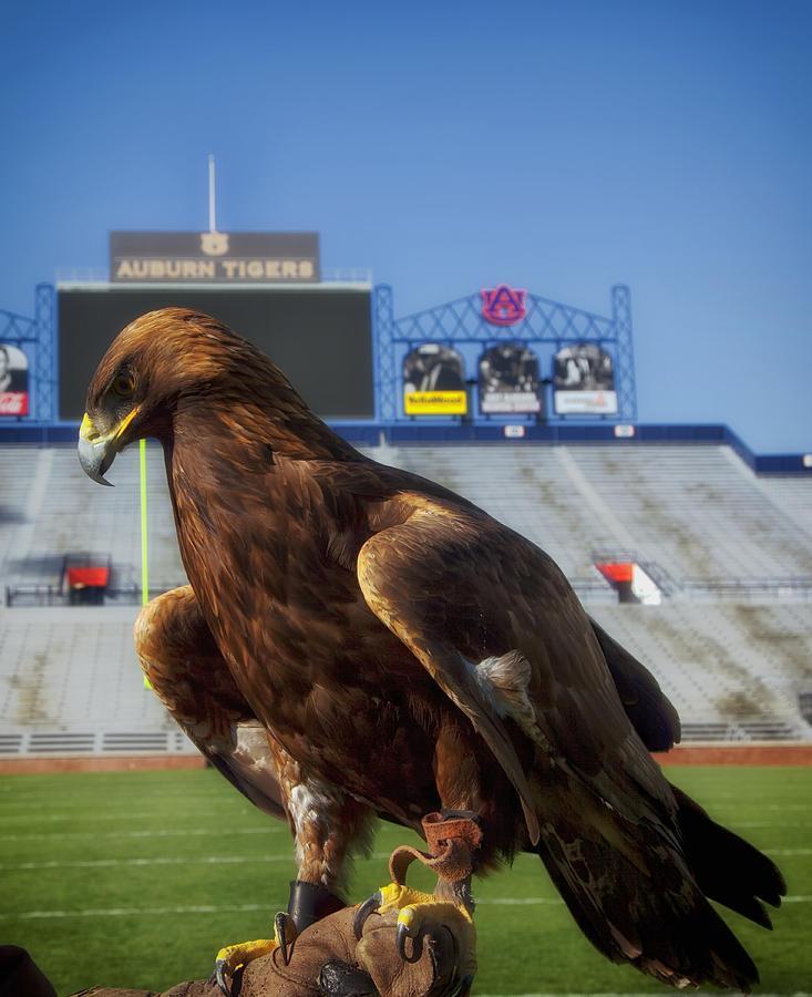 Auburn University Photograph - Auburn War Eagle by Mountain Dreams