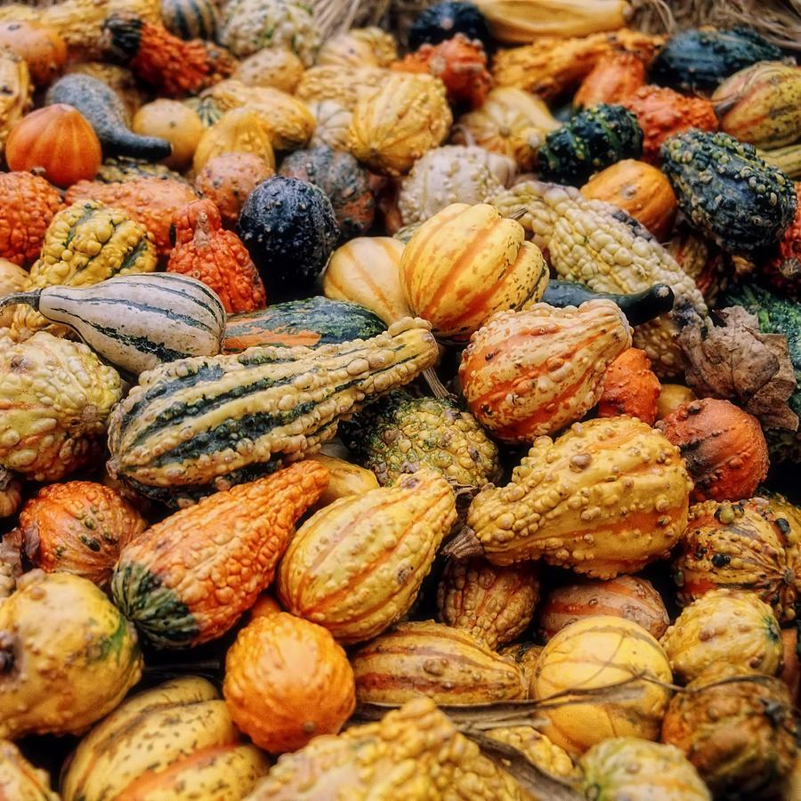 Vegetable Photograph - Autumn Gourds by Joann Vitali