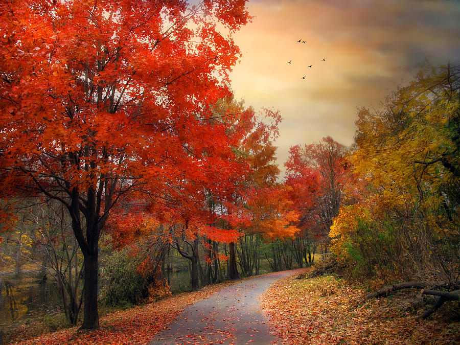 Maple Photograph - Autumn Maples by Jessica Jenney