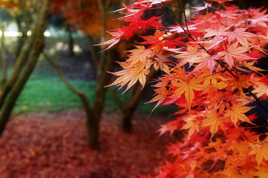 Autumn Photograph - Autumnal Forest by Les Cunliffe