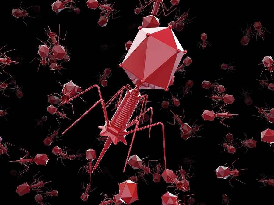 Nobody Photograph - Bacteriophage T4 Viruses by Maurizio De Angelis