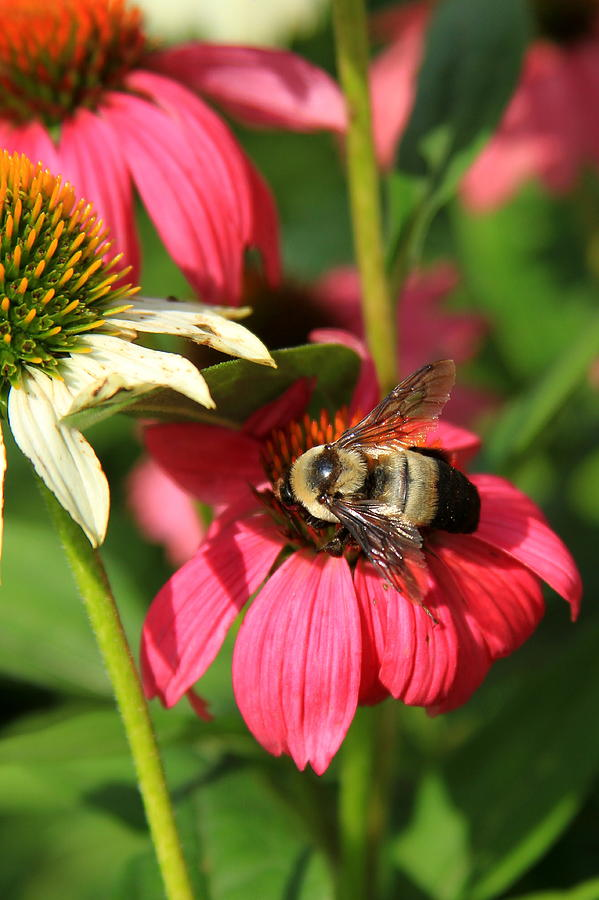 Flower Photograph - Bee Nice by Reid Callaway