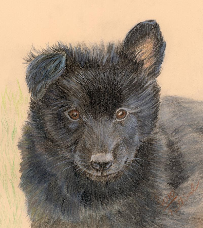 Belgian Sheepdog Puppy Painting By Ruth Seal