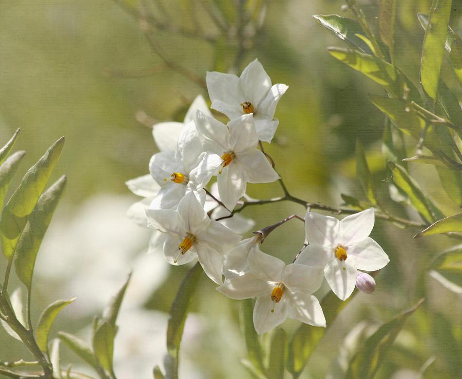 Flower Photograph - Believe by Kim Hojnacki