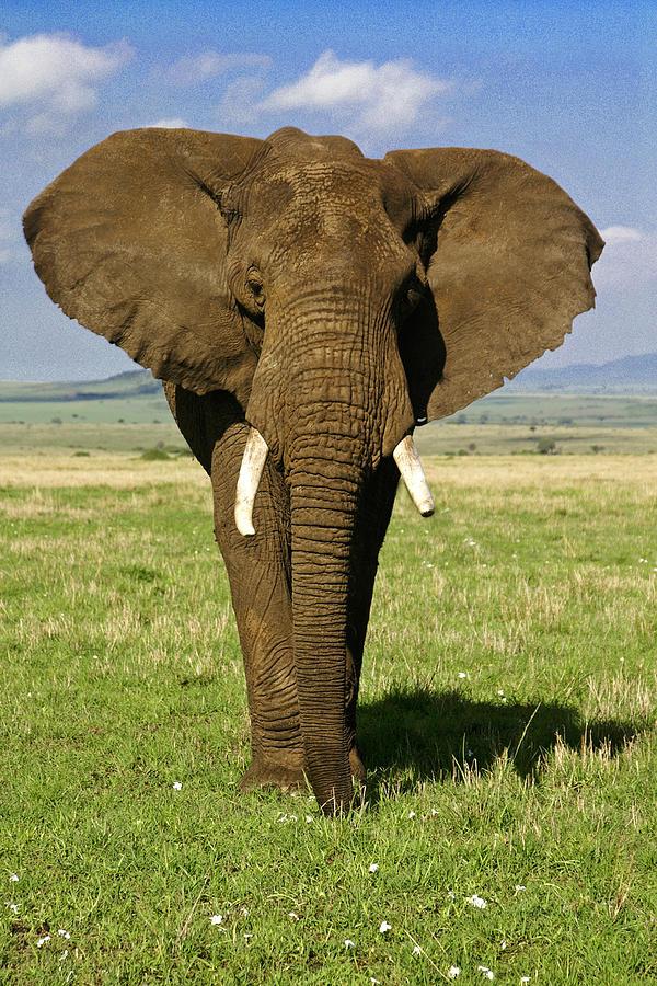 Africa Photograph - Big Boy by Michele Burgess