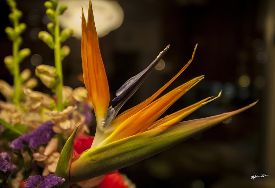 Flower Photograph - Bird Of Paradise by Madeline Ellis