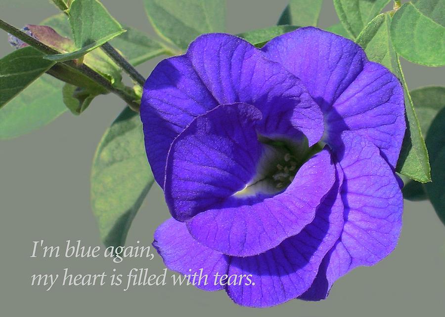 Blue Flowers Photograph - Blue Again by James Temple