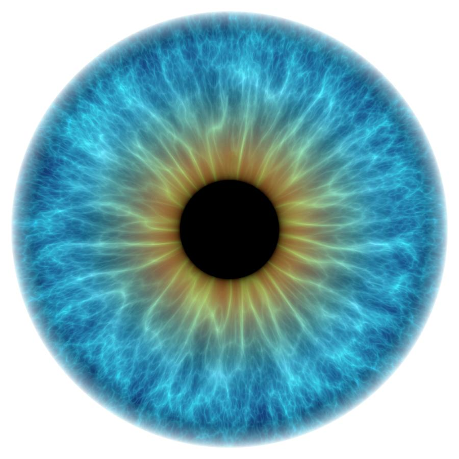 Anatomy Photograph - Blue Eye by Alfred Pasieka/science Photo Library