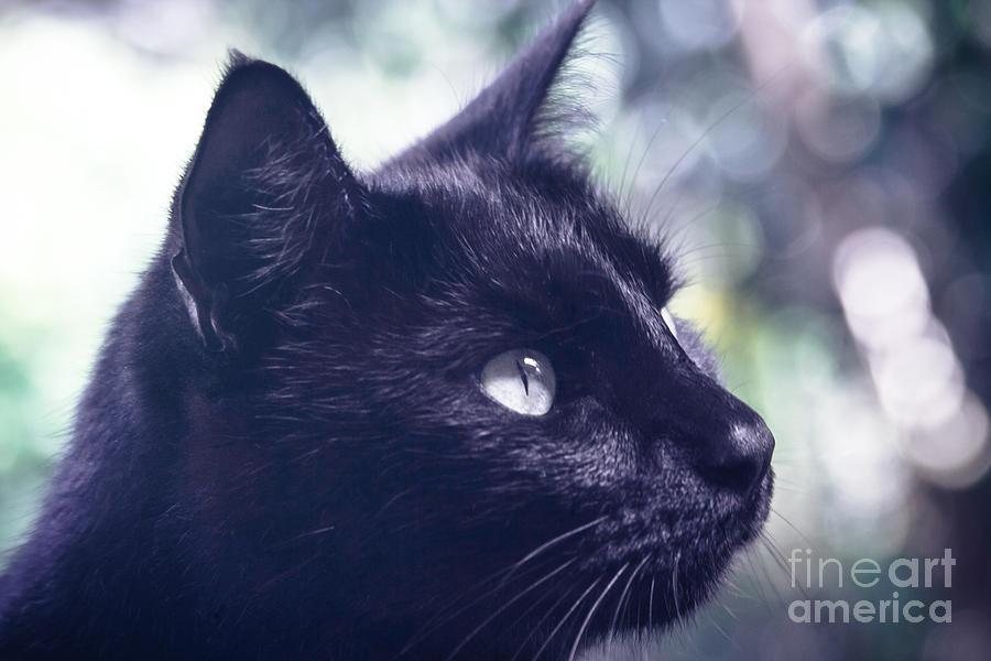 Cat Photograph - Boki by Sharon Mau