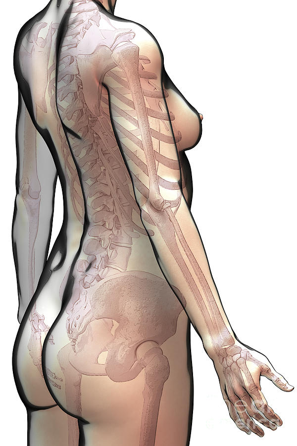 Human Body Photograph - Bones Of The Upper Body Female by Science Picture Co