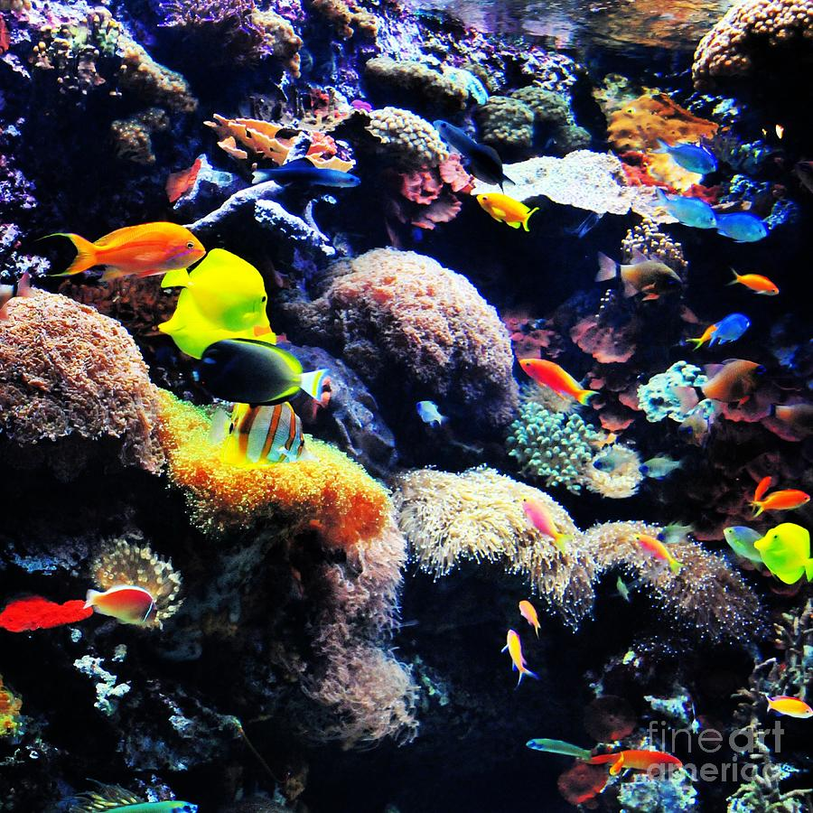 Boston Aquarium Photograph by Samantha Baker