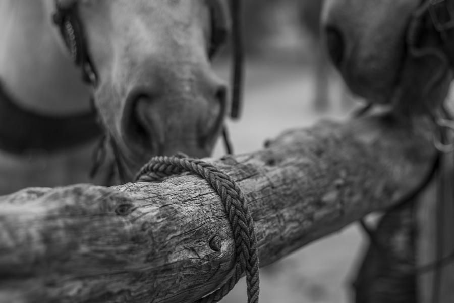 Landscape Photograph - Braided Rope by Amber Kresge