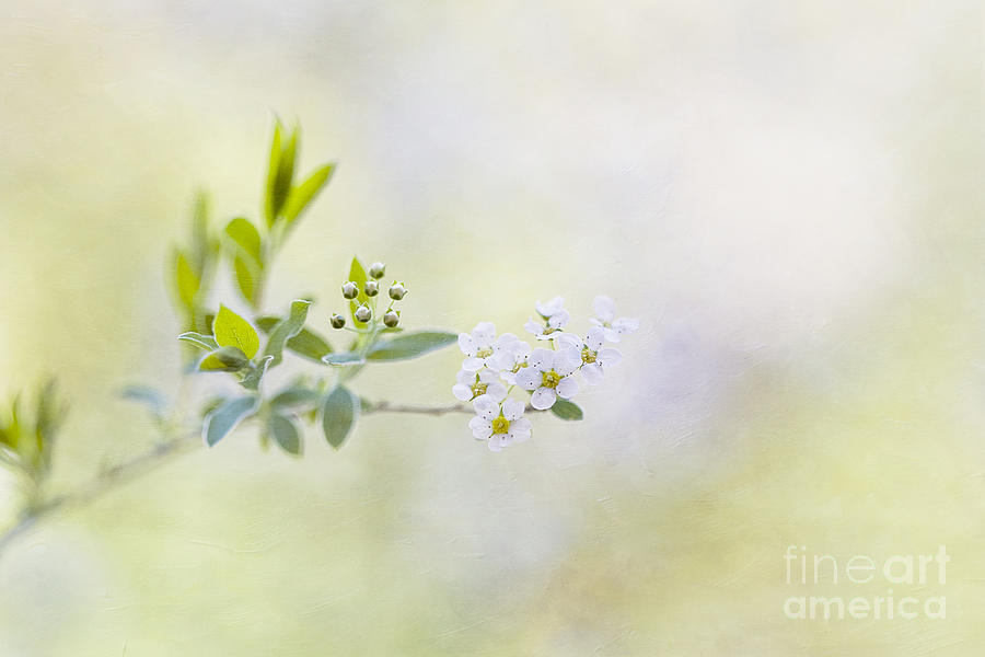 Breath Of Spring Photograph
