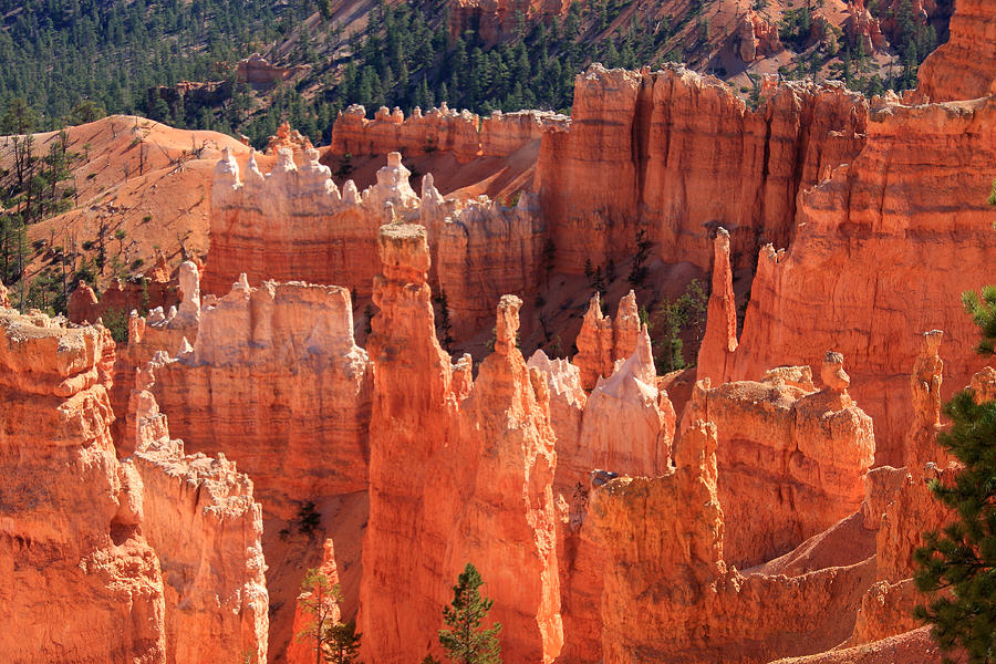 Utah Photograph - Bryce Canyon Red Rock by Aidan Moran