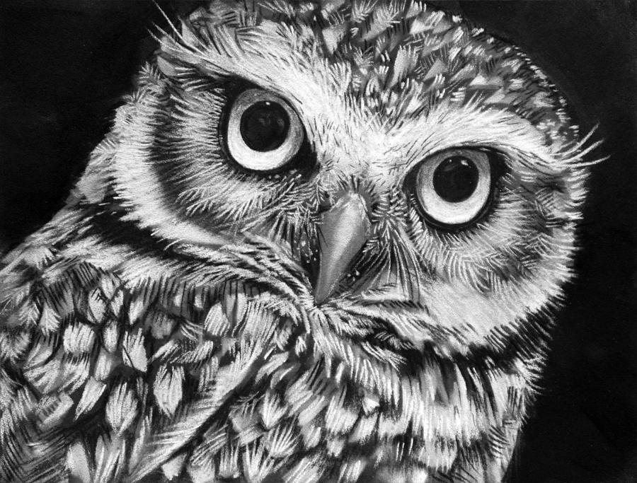 owl drawing drawings burrowing wood sharlena charcoal owls eyes animals google pencil grey endangered animal sketch sketches kratz kunst sketching