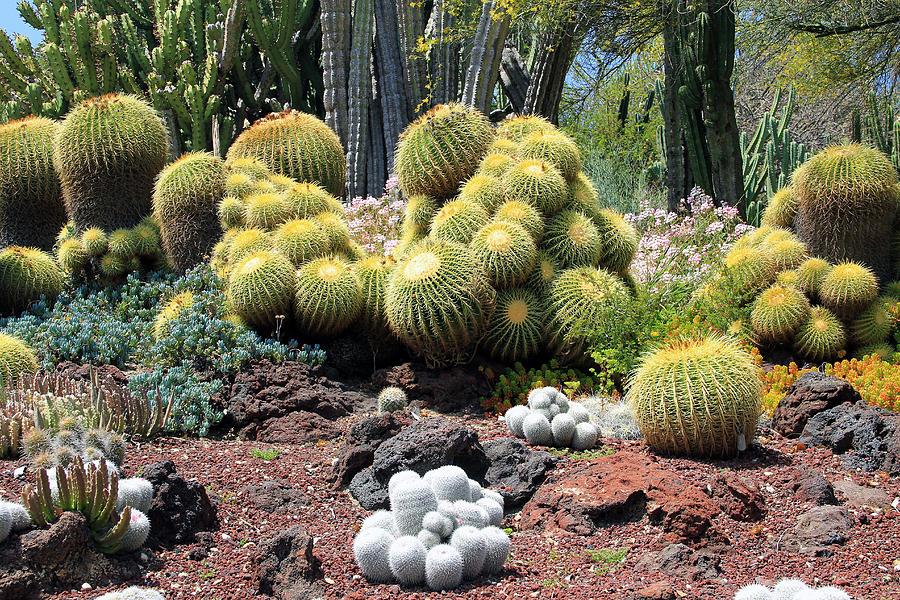 Cactus Photograph - Cactus by Jim McCullaugh