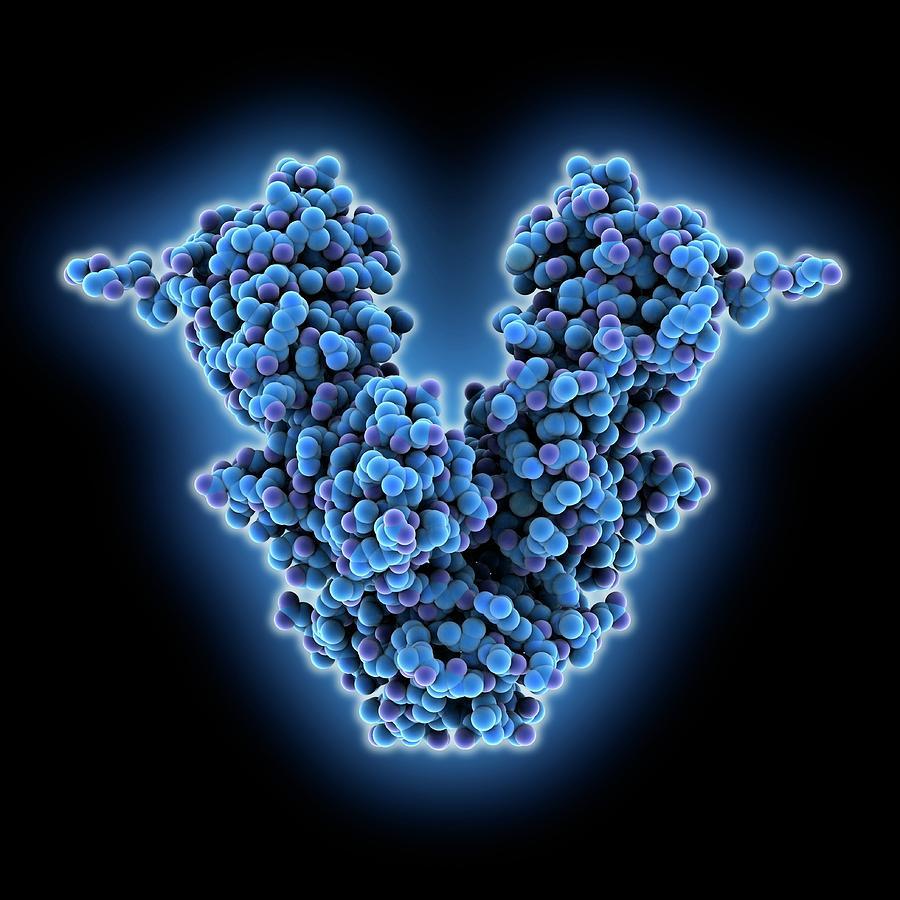 Apoptosis Photograph - Caspase-activated Dnase Molecule by Laguna Design