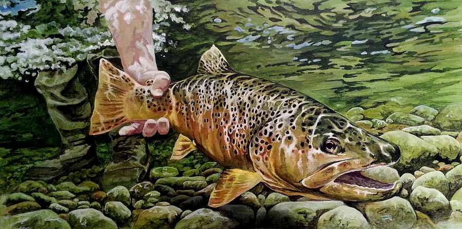 Catch and release by Tim  Joyner